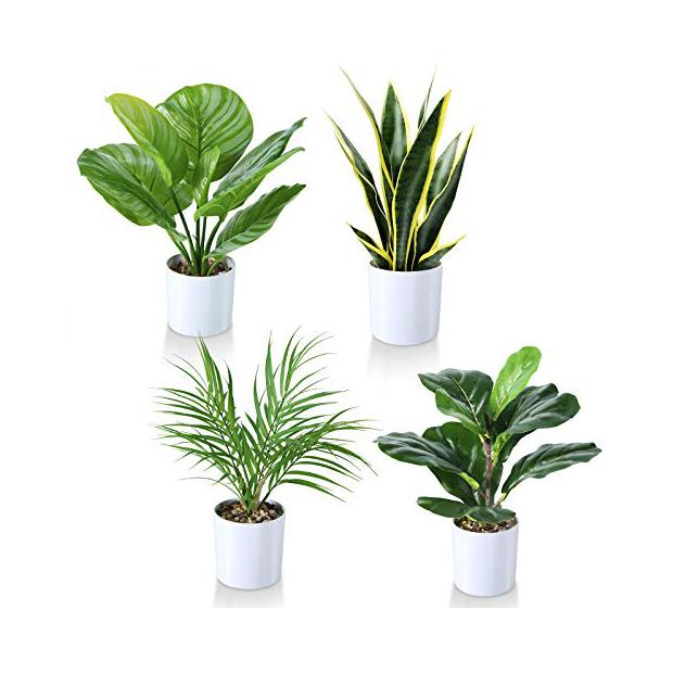 Plantas artificiales naturales